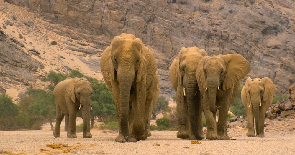 Conscious gifts for kids: A pride of elephants