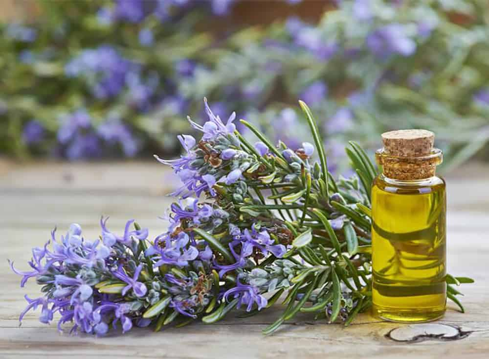 Lavender and a bottle of oil