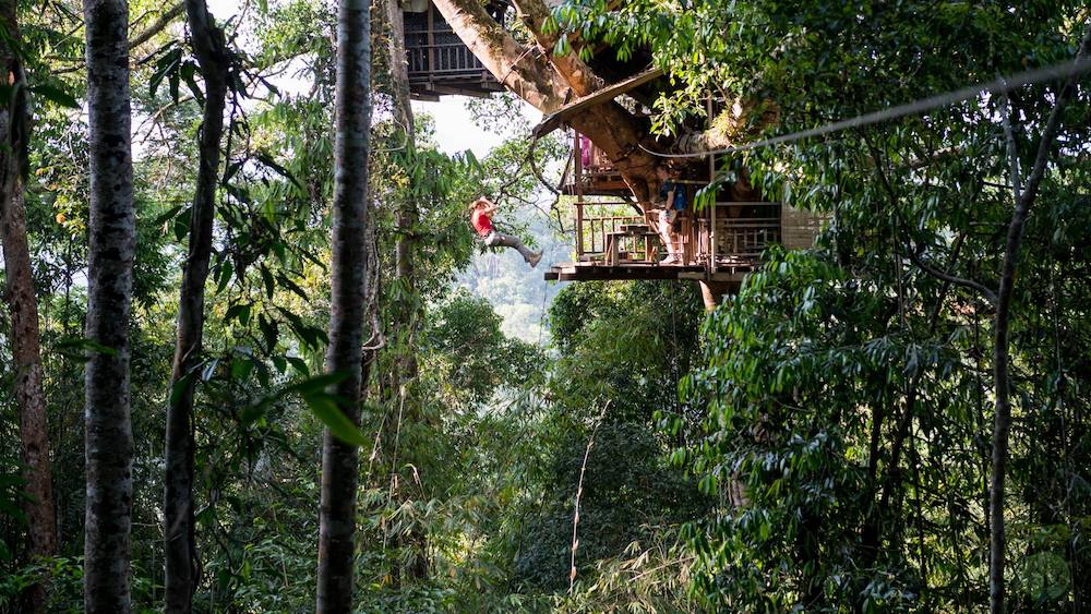 The Gibbon Experience treehouse and zipline