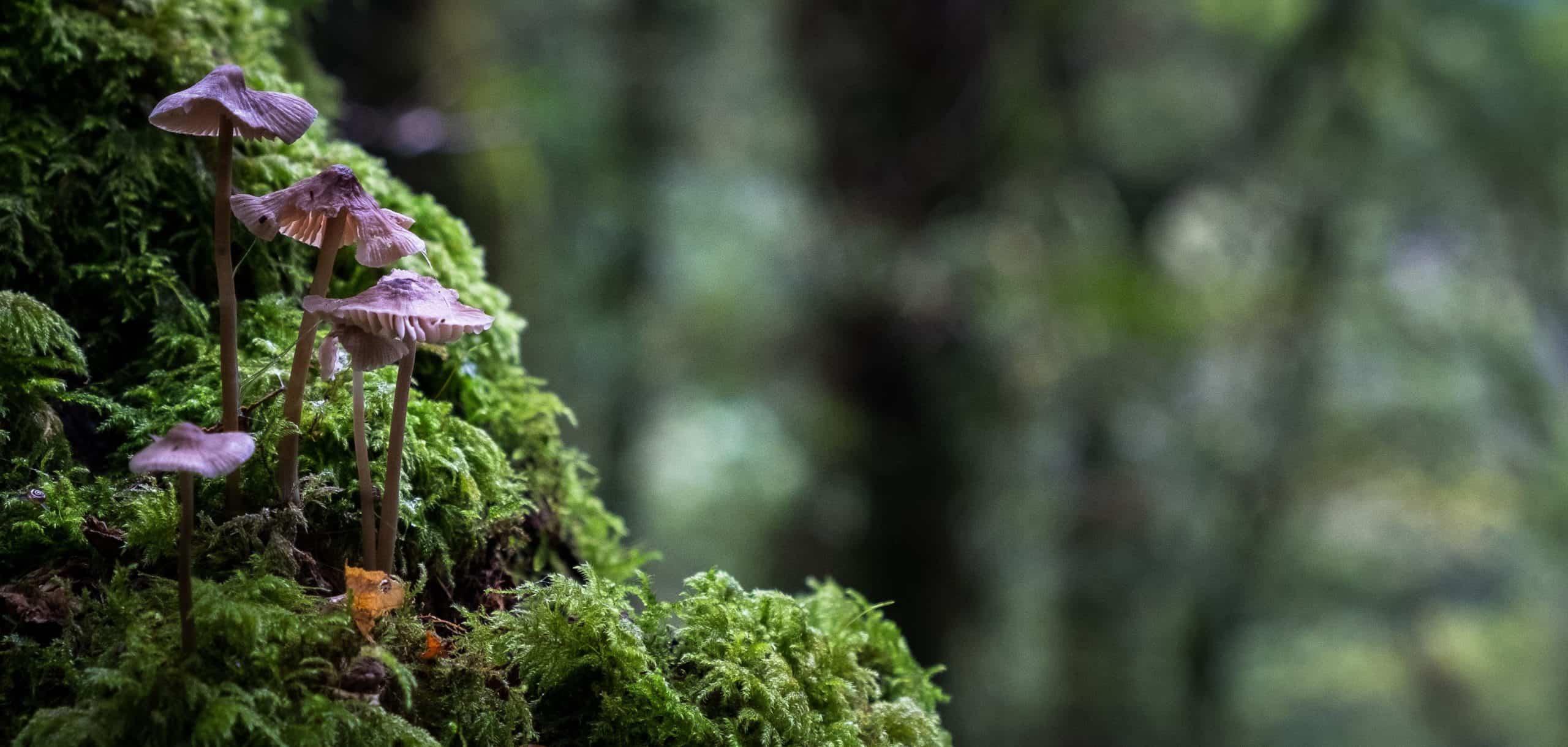mushrooms green is the new black biodiversity