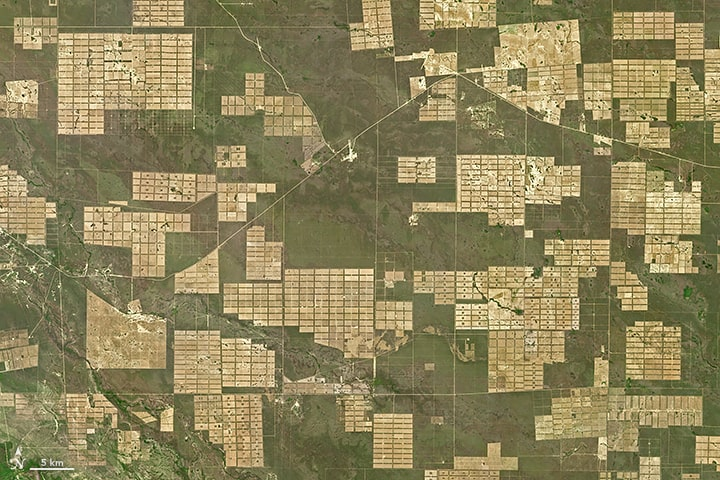 deforestation paraguay green is the new black